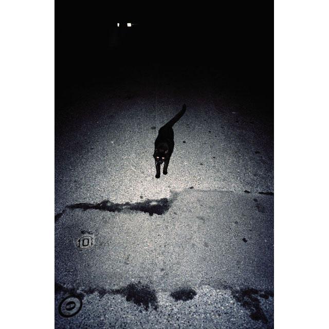 CAT © Efrem Raimondi. All Rights Reserved